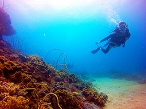 墾丁-藍洞平台體驗潛水