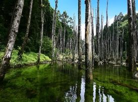 台灣九寨溝忘憂森林